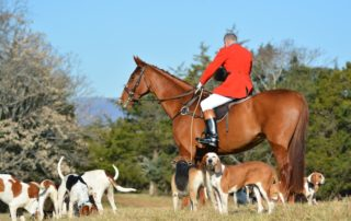 Fox Hunting in Virginia