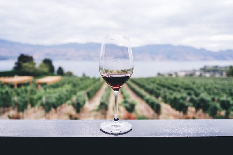Fall In Love With Virginia Vineyards & Wineries
