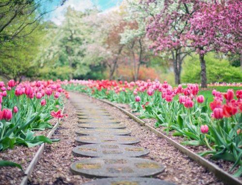 Our Top Picks for Historic Virginia Garden Week in Central Va.